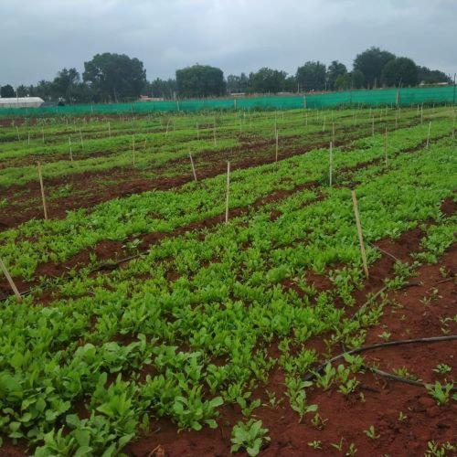 Geetanjali organic farming