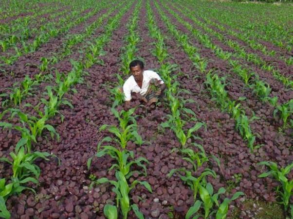 Part time farming